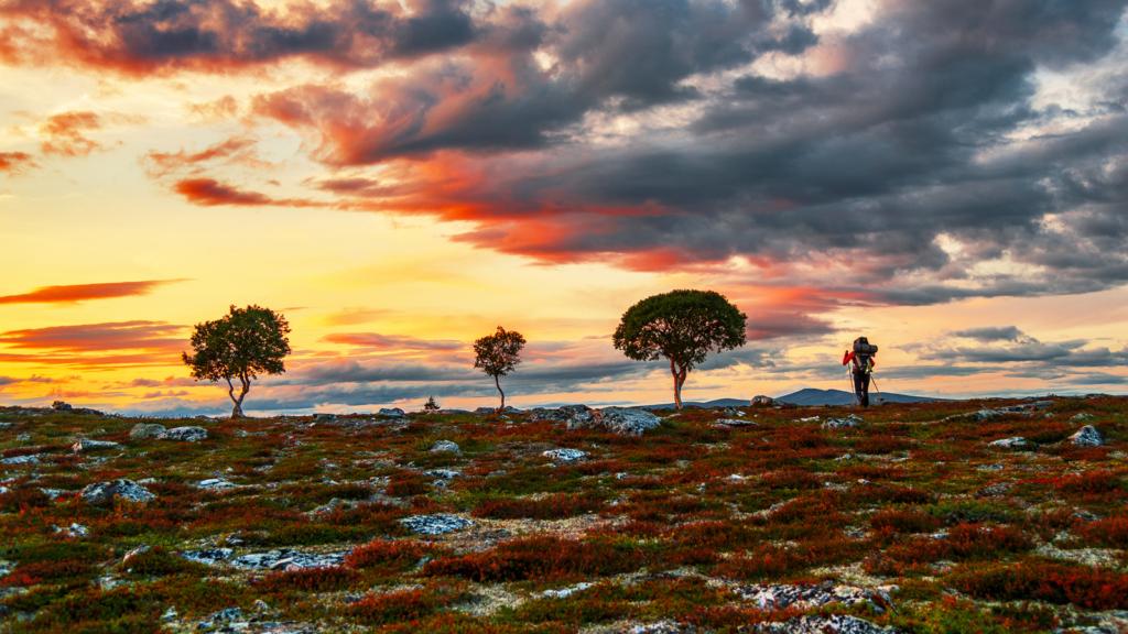 Trøndelags nasjonalparkområder