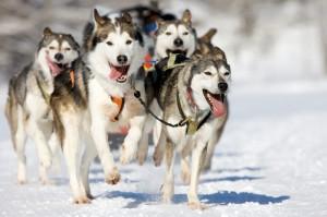 Hundekjøring i Meråker med Norway Husky Adventure, Foto: Norway Husky Adventure