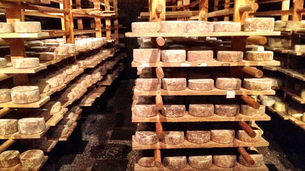 Fra ost til ost i Trøndelag