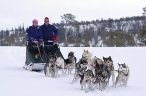 Hundekjøring med Sporbryter sledehundkennel i Ogndal ved Steinkjer på Innherred, Trøndelag, Foto: Visit Innherred