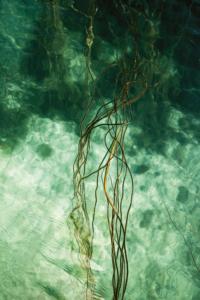 Dykk i krystallklart vann på Frøya. Foto: Jarle Hagen